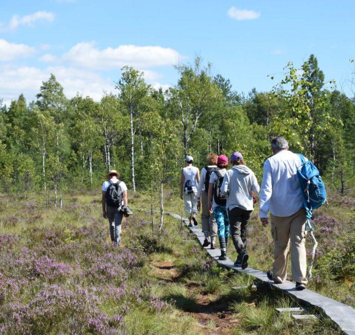 Thérapie nature dans le Parc du Teijo