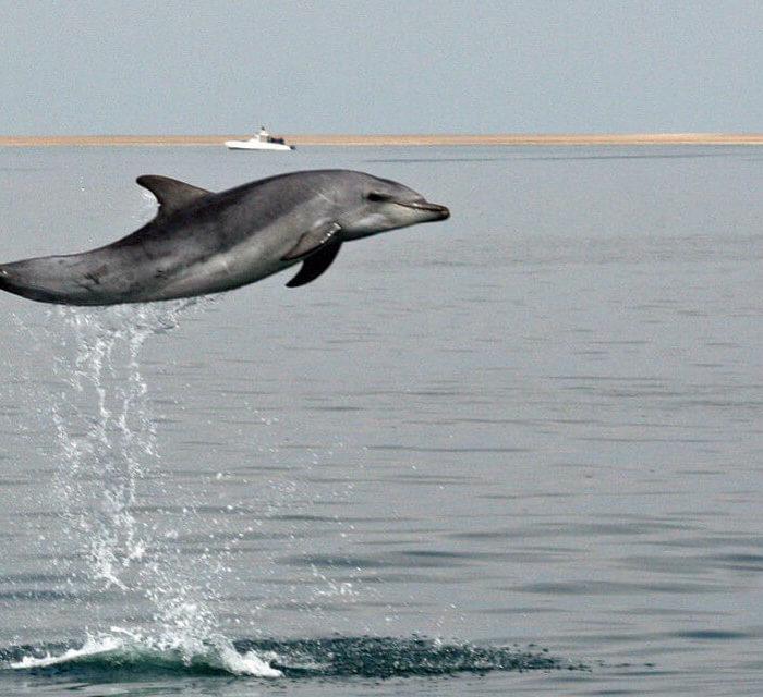 Croisière avec les dauphins | © Mola Mola