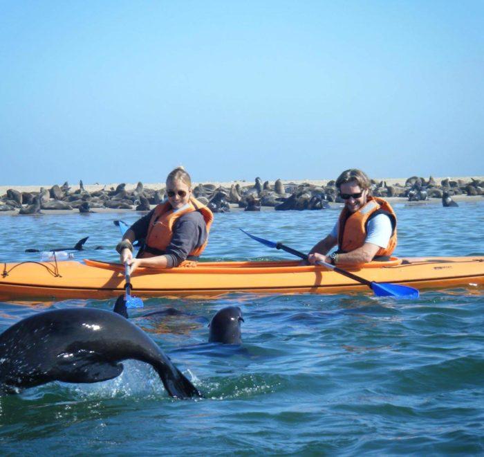 Faire du kayak avec les otaries | © Pelican Point Kayaking