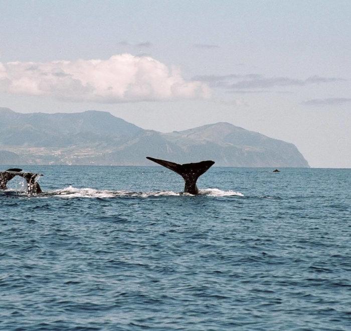 Rencontre avec les baleines | © Melo Travel