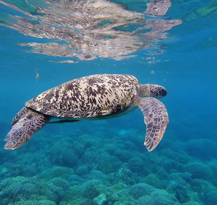 Une vie marine exceptionnelle