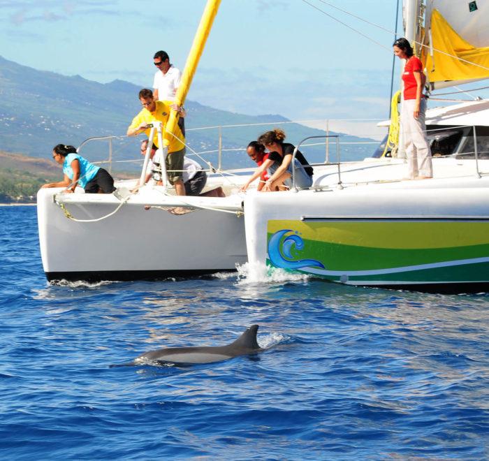 Observation des dauphins en catamaran | © Croisieres & Découvertes