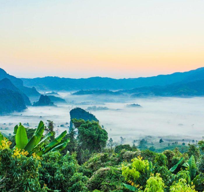 Randonnée dans la jungle thaïlandaise
