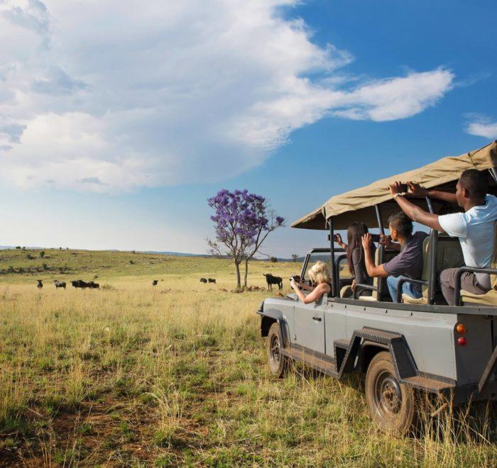 Faites le plein de safaris dans le Berceau de l'Humanité