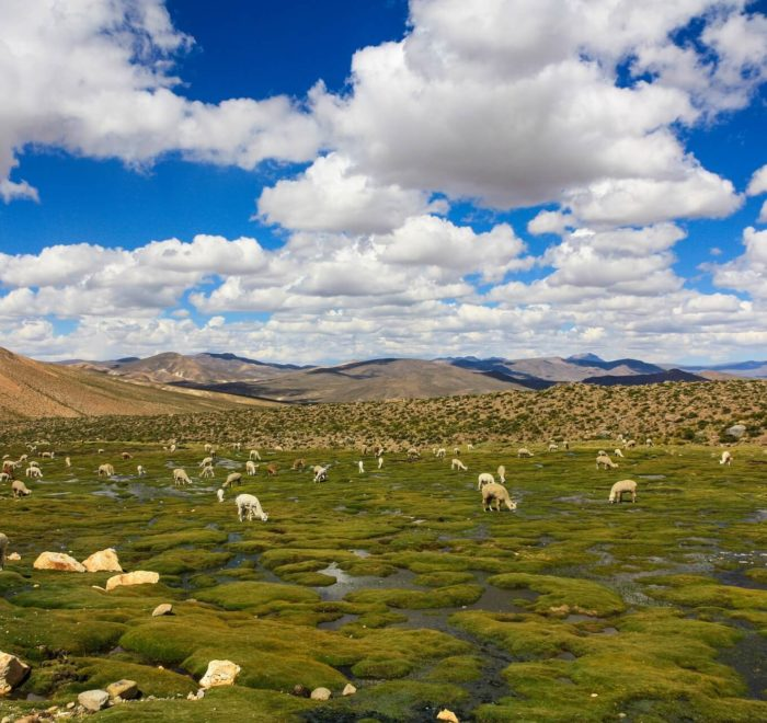 Route à travers l'Altiplano