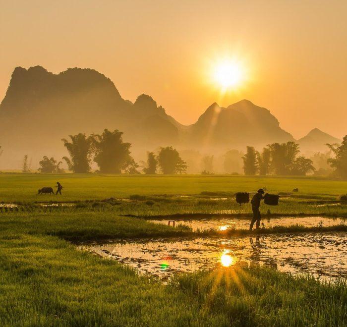 Ainsi va la vie au Vietnam
