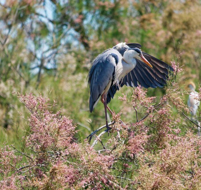 Visite du Parc Ornithologique du Pont de Gau